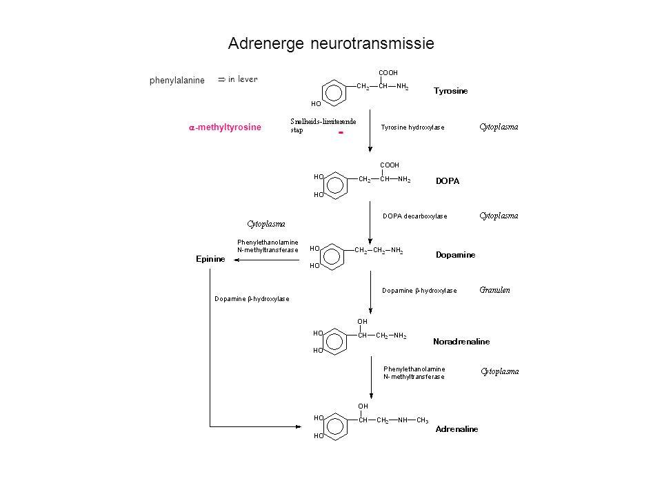 Adrenerge neurotransmissie