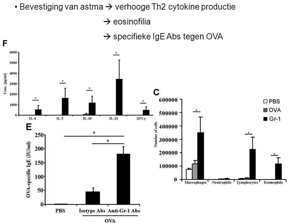 Bevestiging van astma  verhooge Th2 cytokine productie