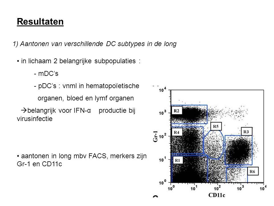 Resultaten 1) Aantonen van verschillende DC subtypes in de long
