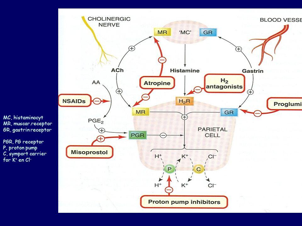 MC, histaminocyt MR, muscar