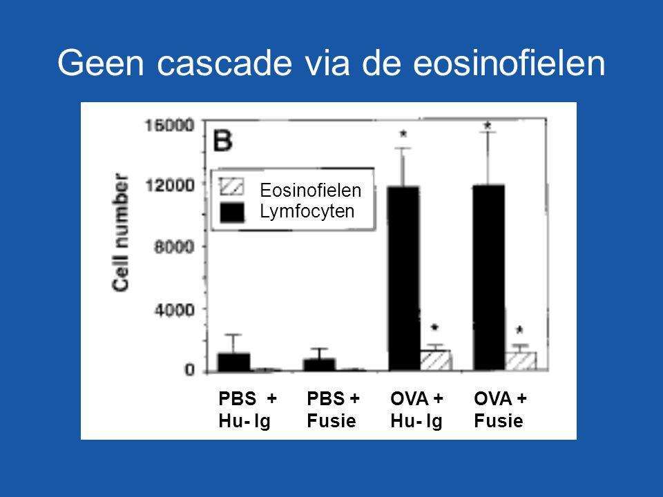 Geen cascade via de eosinofielen
