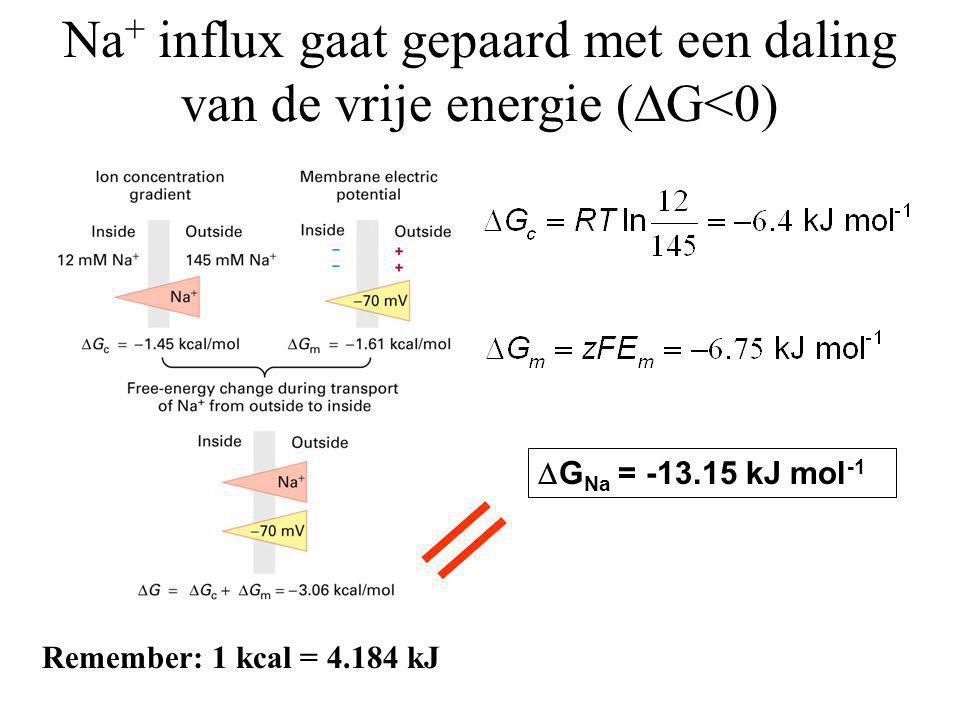 Na+ influx gaat gepaard met een daling van de vrije energie (G<0)