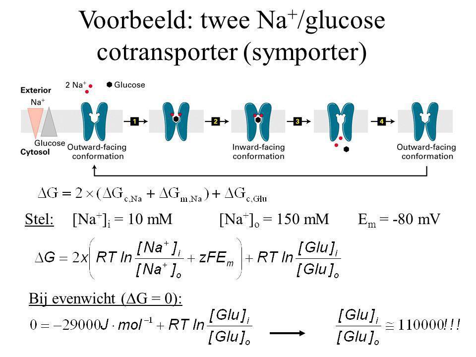 Voorbeeld: twee Na+/glucose cotransporter (symporter)