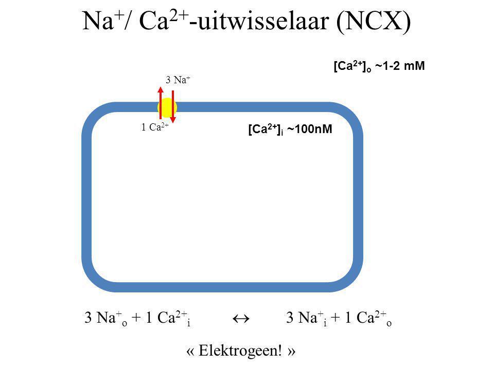 Na+/ Ca2+-uitwisselaar (NCX)
