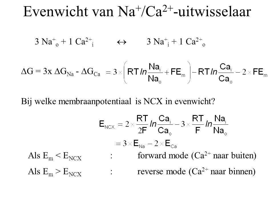 Evenwicht van Na+/Ca2+-uitwisselaar