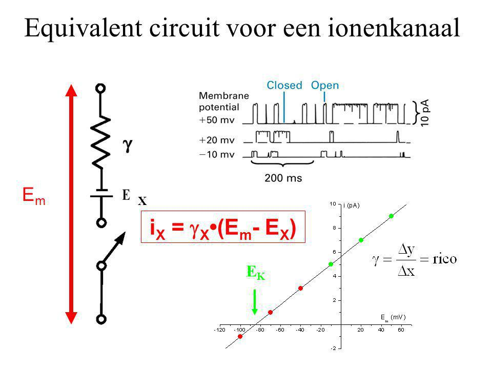 Equivalent circuit voor een ionenkanaal