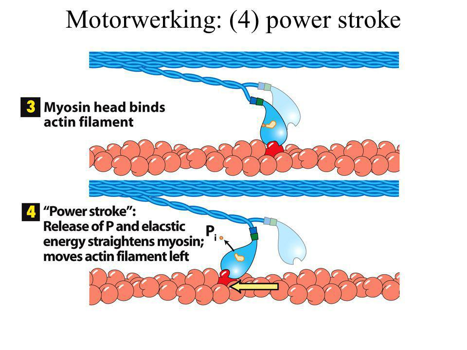 Motorwerking: (4) power stroke