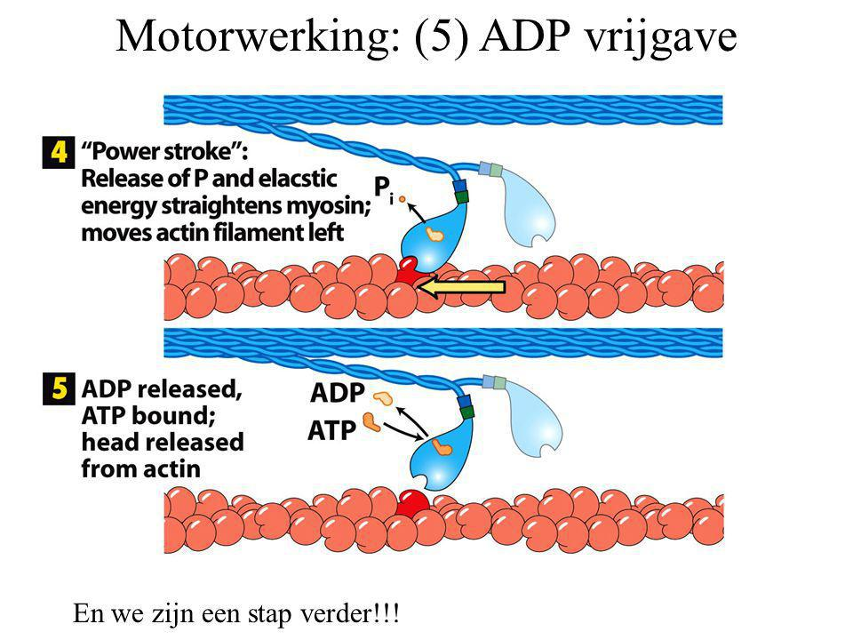 Motorwerking: (5) ADP vrijgave