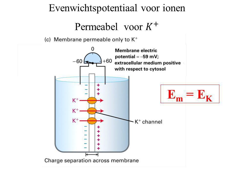 Evenwichtspotentiaal voor ionen