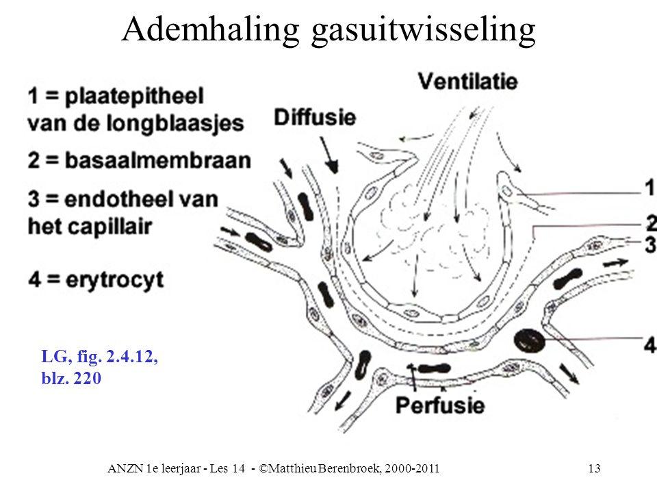 Ademhaling gasuitwisseling