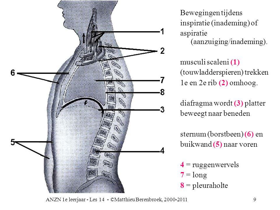 ANZN 1e leerjaar - Les 14 - ©Matthieu Berenbroek, 2000-2011