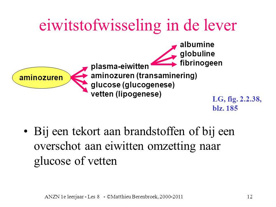 eiwitstofwisseling in de lever