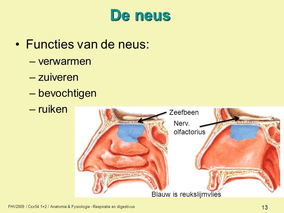 De neus Functies van de neus: verwarmen zuiveren bevochtigen ruiken