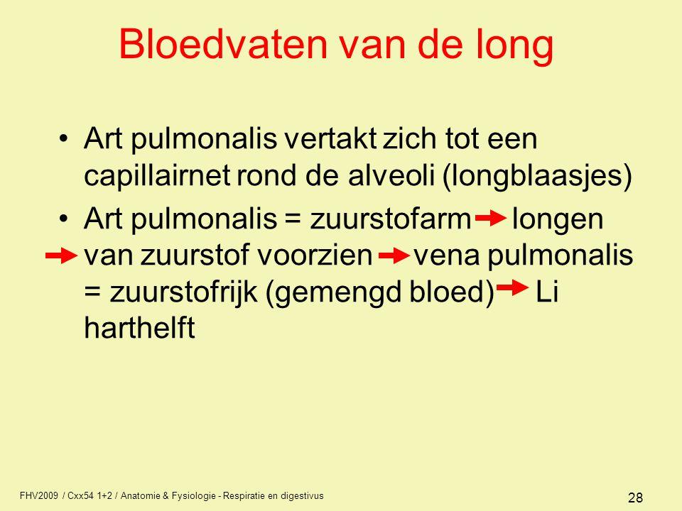 Bloedvaten van de long Art pulmonalis vertakt zich tot een capillairnet rond de alveoli (longblaasjes)