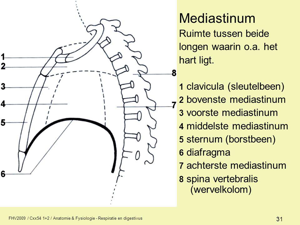 Mediastinum Ruimte tussen beide longen waarin o.a. het hart ligt.
