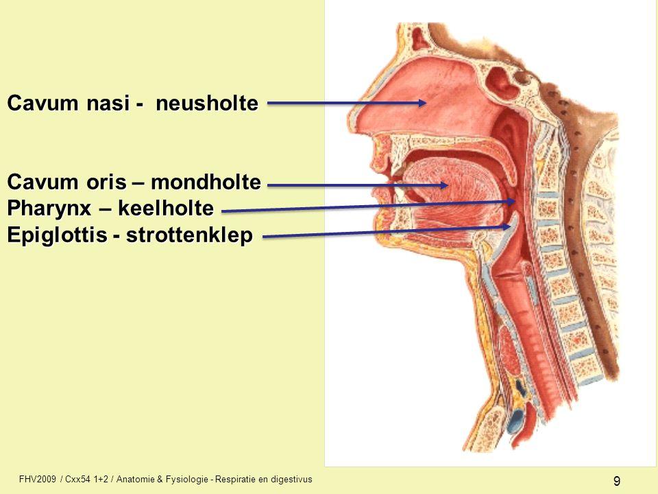 Cavum nasi - neusholte Cavum oris – mondholte Pharynx – keelholte Epiglottis - strottenklep