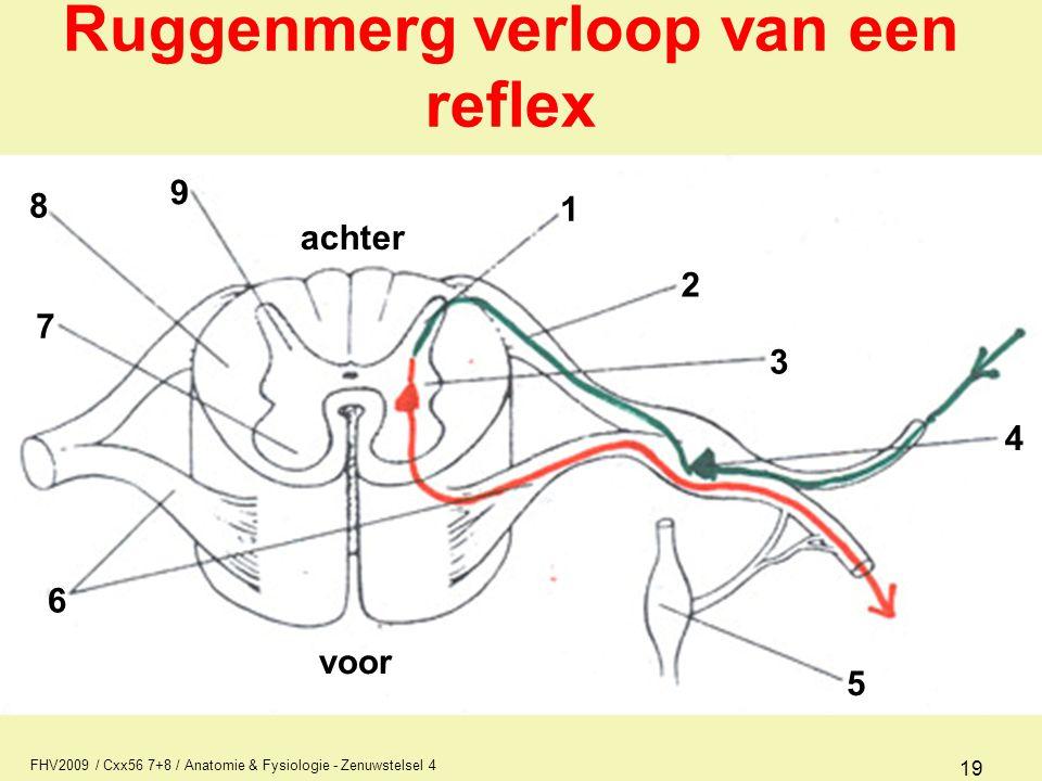 Ruggenmerg verloop van een reflex