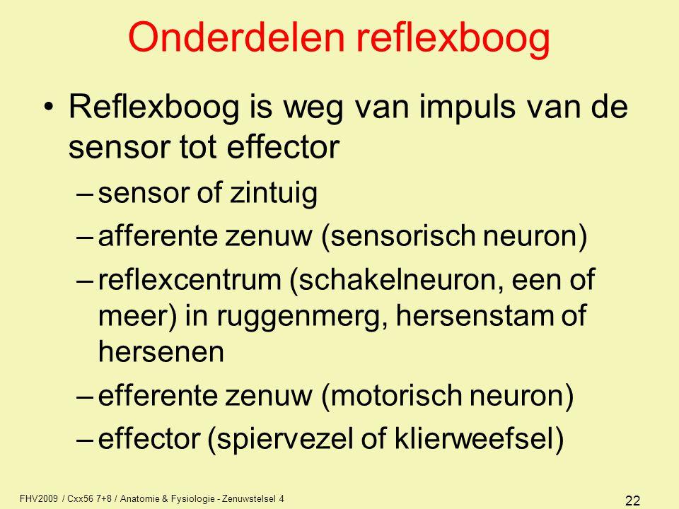Onderdelen reflexboog