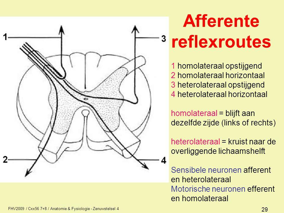 Afferente reflexroutes