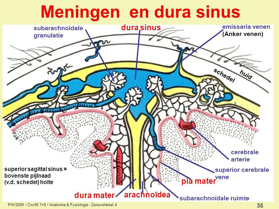 Meningen en dura sinus dura sinus pia mater dura mater arachnoïdea