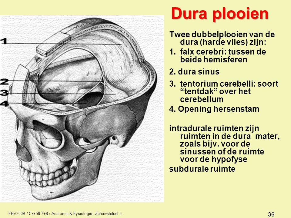 Dura plooien Twee dubbelplooien van de dura (harde vlies) zijn: