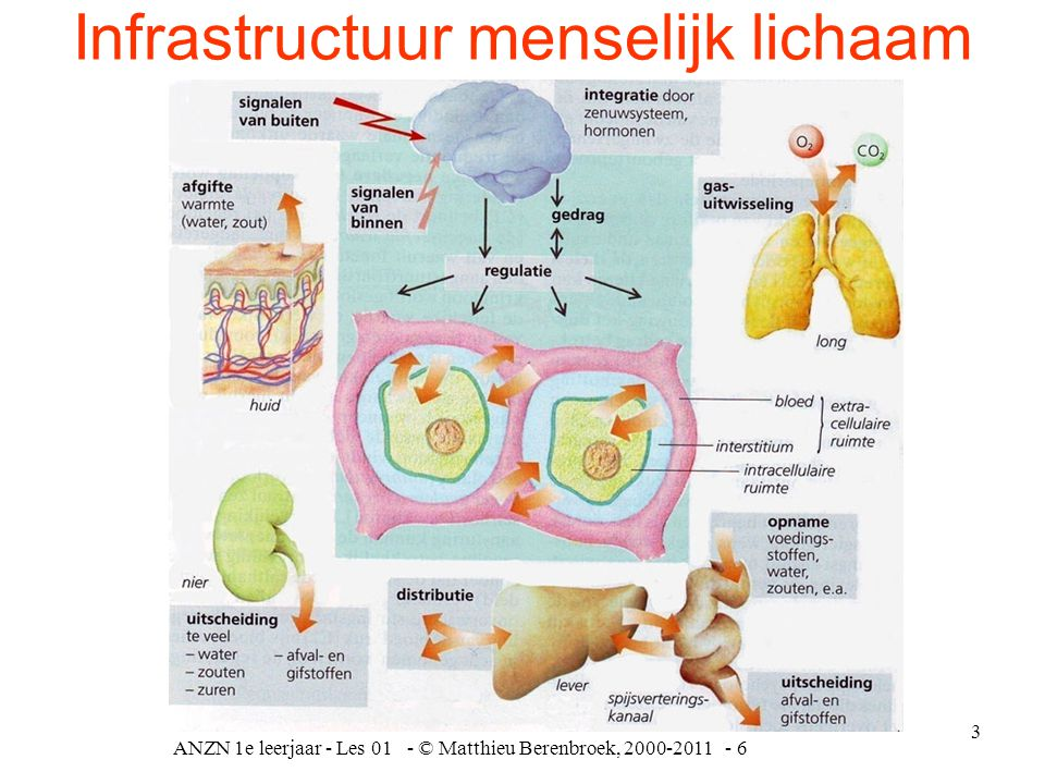 Infrastructuur menselijk lichaam