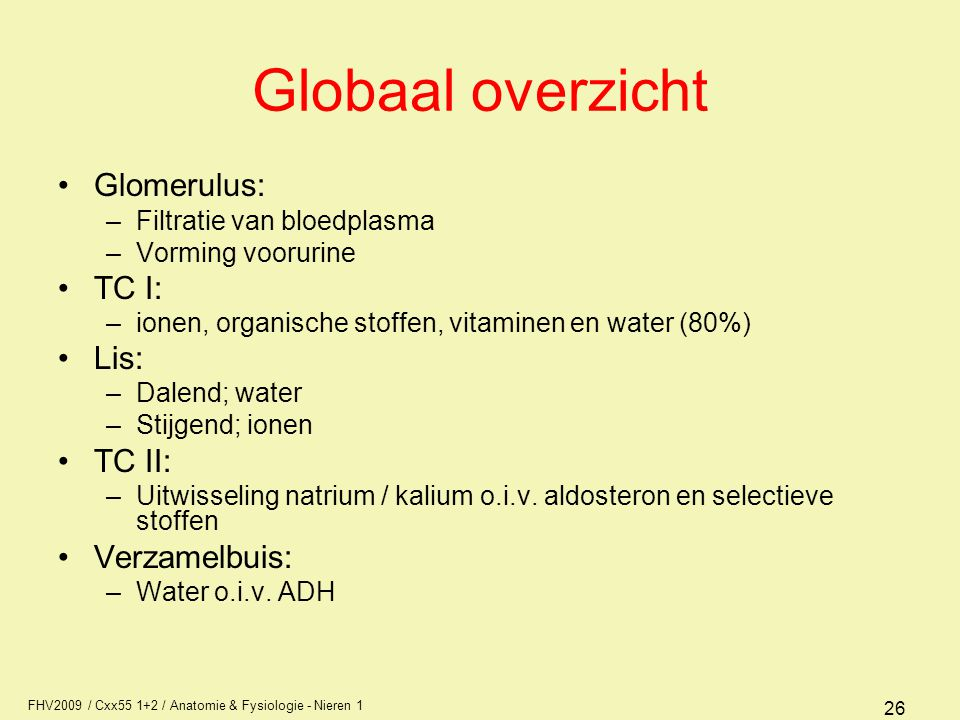 Globaal overzicht Glomerulus: TC I: Lis: TC II: Verzamelbuis: