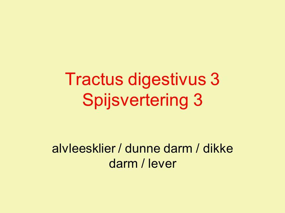 Tractus digestivus 3 Spijsvertering 3