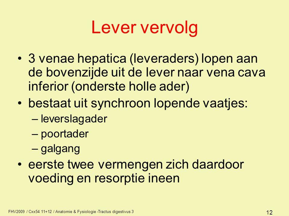 Lever vervolg 3 venae hepatica (leveraders) lopen aan de bovenzijde uit de lever naar vena cava inferior (onderste holle ader)