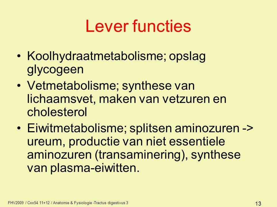 Lever functies Koolhydraatmetabolisme; opslag glycogeen