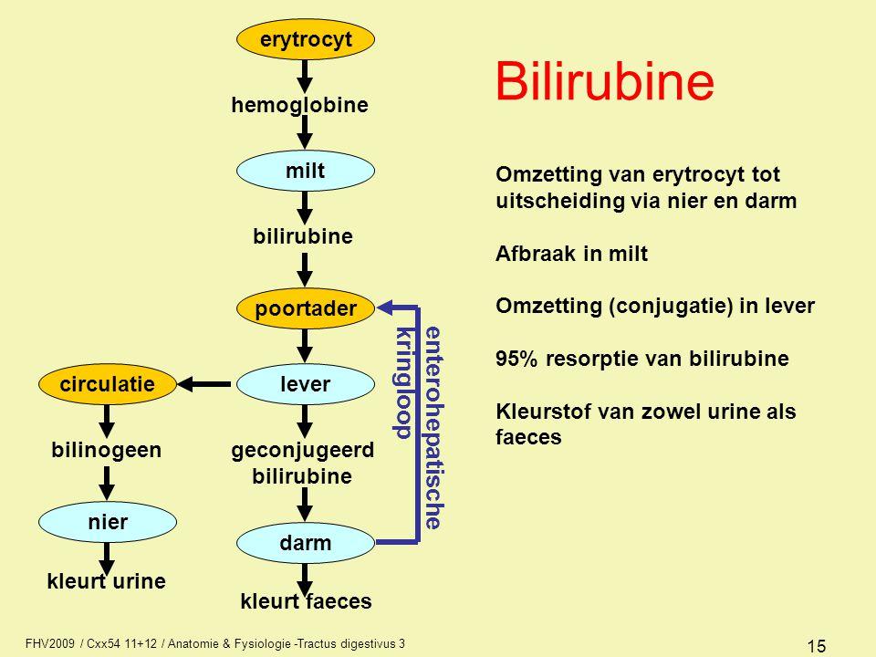 Bilirubine enterohepatische kringloop erytrocyt milt poortader lever