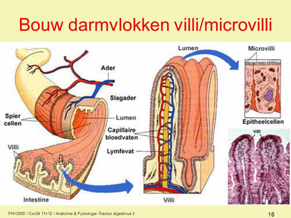 Bouw darmvlokken villi/microvilli
