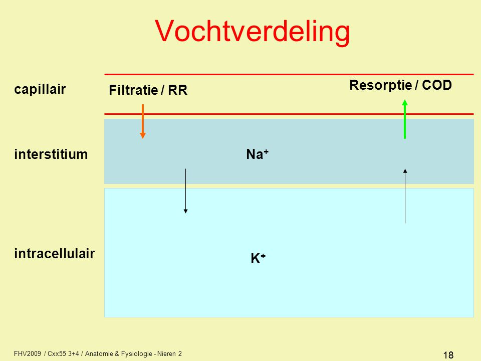 Vochtverdeling Filtratie / RR Resorptie / COD capillair interstitium