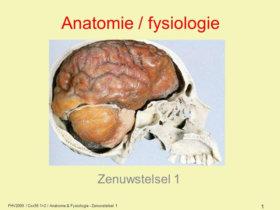 Anatomie / fysiologie Zenuwstelsel 1 AFI1