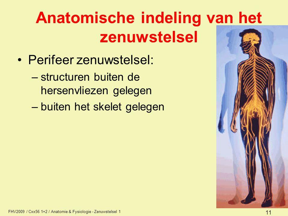 Anatomische indeling van het zenuwstelsel