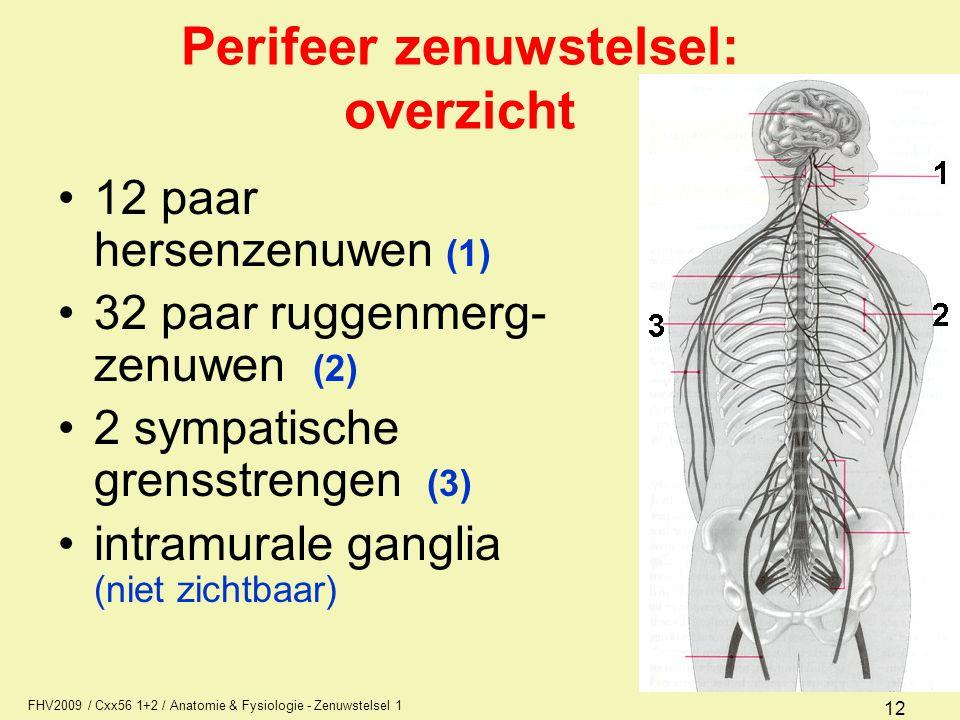 Perifeer zenuwstelsel: overzicht