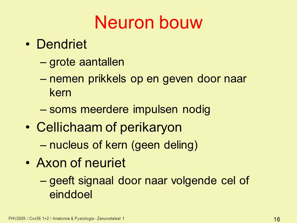 Neuron bouw Dendriet Cellichaam of perikaryon Axon of neuriet