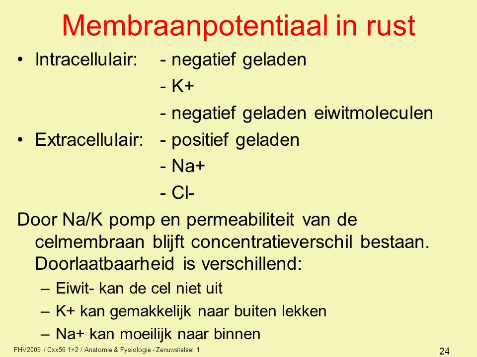 Membraanpotentiaal in rust