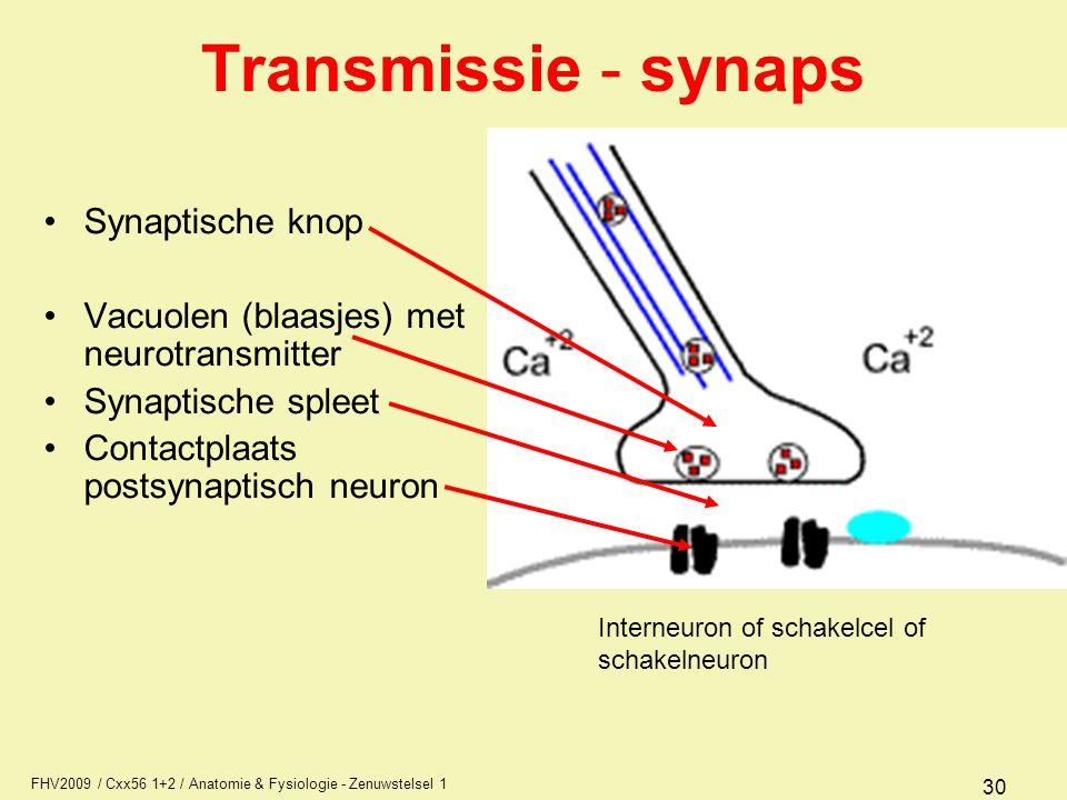 Transmissie - synaps Synaptische knop