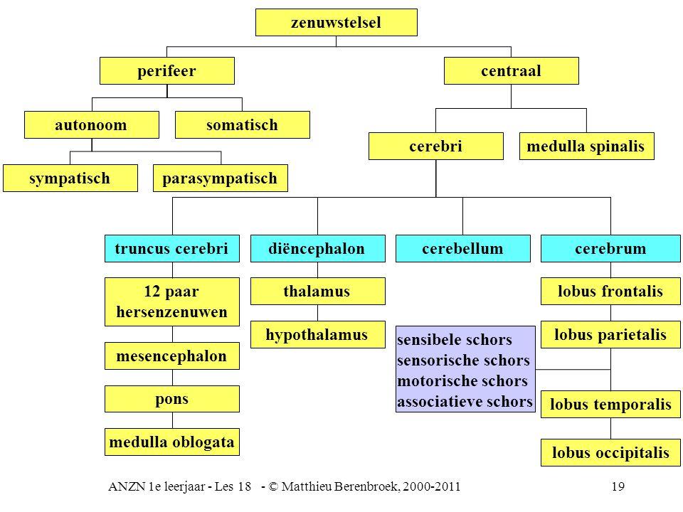 ANZN 1e leerjaar - Les 18 - © Matthieu Berenbroek, 2000-2011