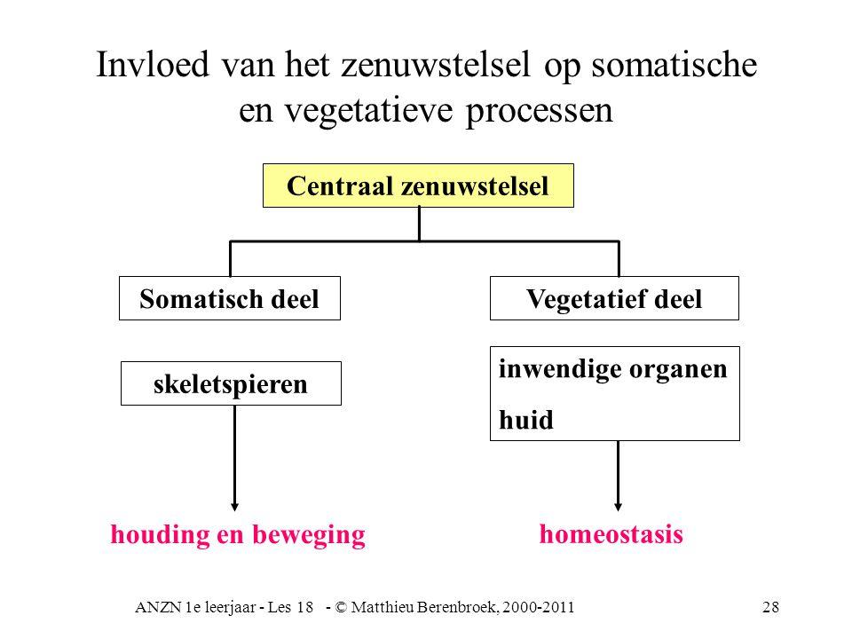 Invloed van het zenuwstelsel op somatische en vegetatieve processen