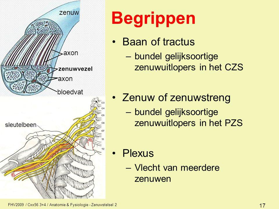 Begrippen Baan of tractus Zenuw of zenuwstreng Plexus