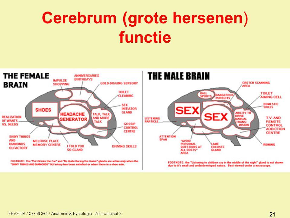 Cerebrum (grote hersenen) functie