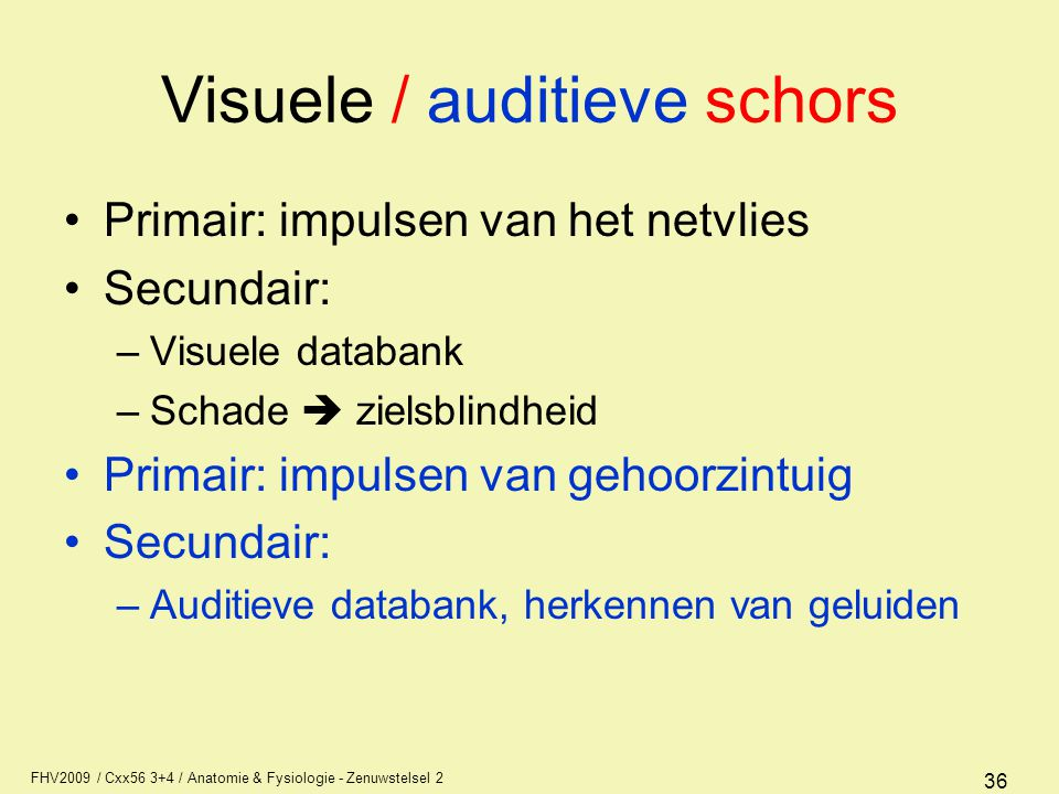 Visuele / auditieve schors