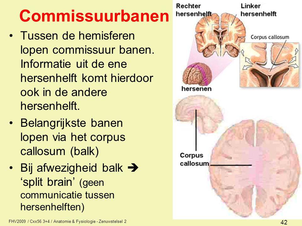 Commissuurbanen Tussen de hemisferen lopen commissuur banen. Informatie uit de ene hersenhelft komt hierdoor ook in de andere hersenhelft.