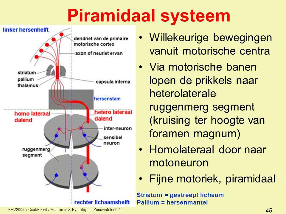 Piramidaal systeem Willekeurige bewegingen vanuit motorische centra