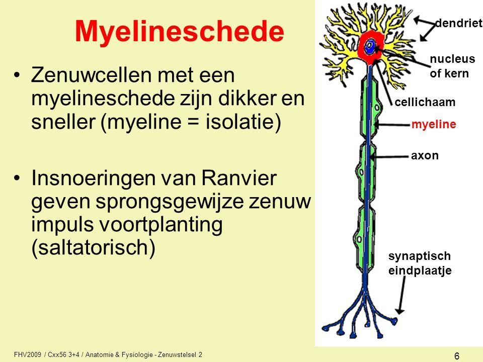 Myelineschede dendriet. nucleus. of kern. Zenuwcellen met een myelineschede zijn dikker en sneller (myeline = isolatie)