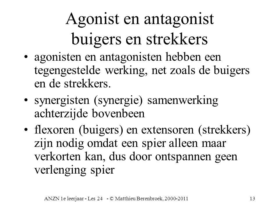 Agonist en antagonist buigers en strekkers