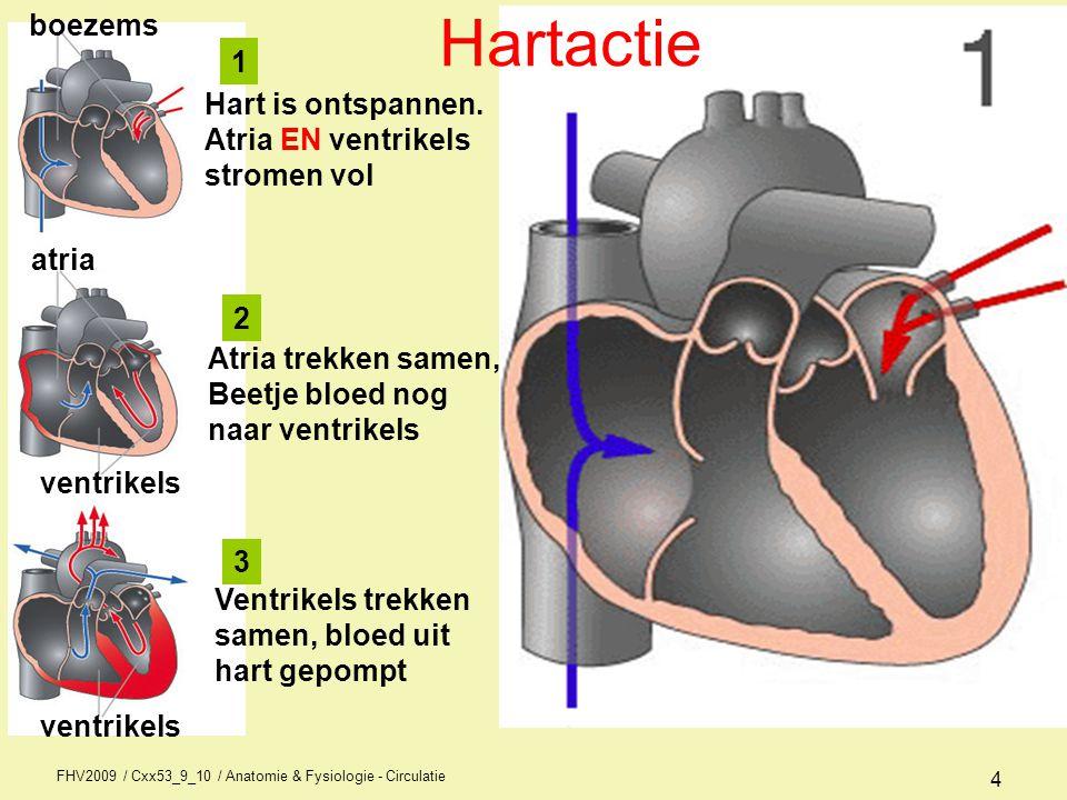 Hartactie boezems 1 Hart is ontspannen. Atria EN ventrikels