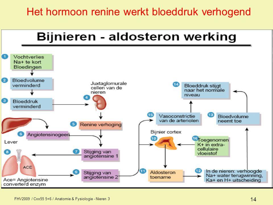 Het hormoon renine werkt bloeddruk verhogend